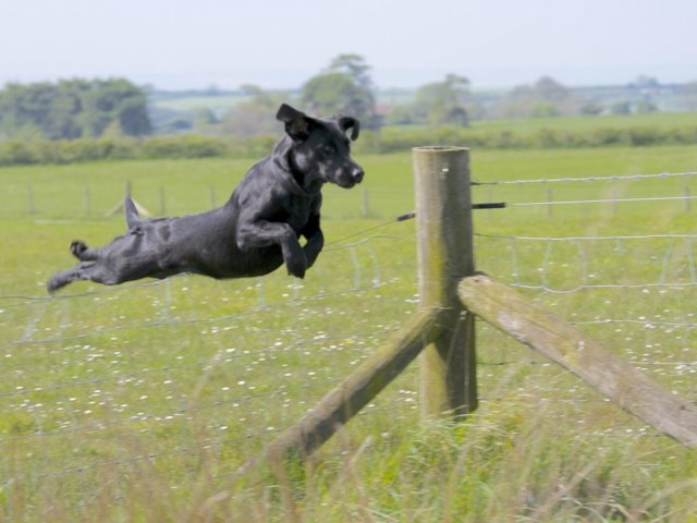 Ziva has learnt to jump over fences (or better - she flies  over them)...