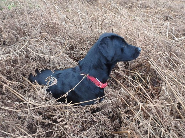 January 2016: end of season and our attentive Ziva knows what steadiness means and what she has to do!