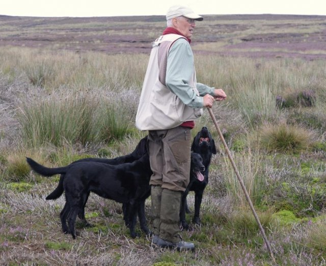 August 2016: start of another shooting season. Several times Zoe is allowed to join the gang for grouse picking up...